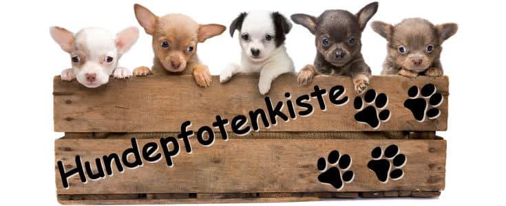 Logo hundepfotenkiste.de/images/Hunde_Shampoos.jpg